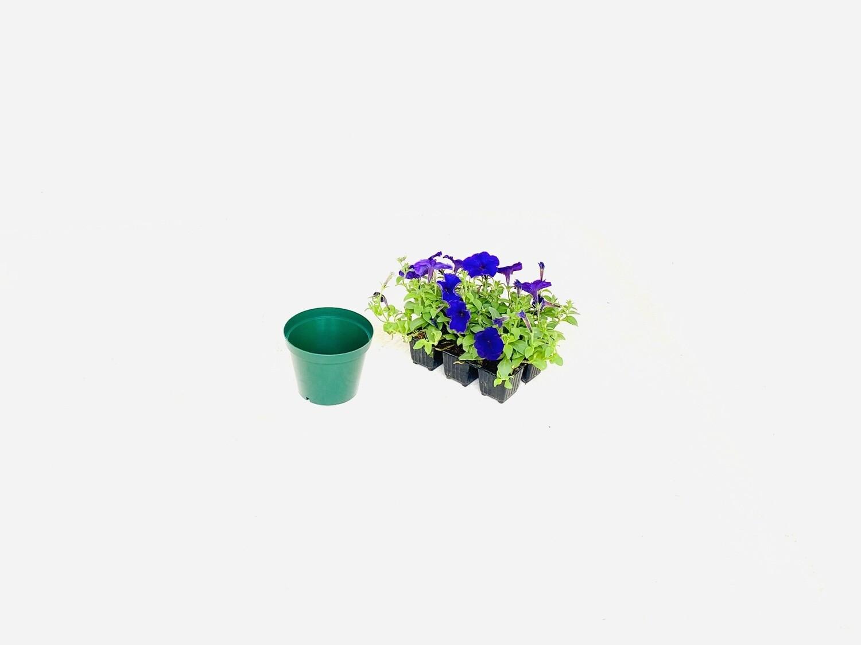 12,5cm Pot Green Width 12.5cm x Height 10cm