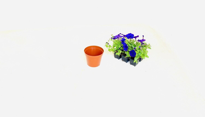 12,5cm Pot  Terracotta 12.5cm x Height 10cm