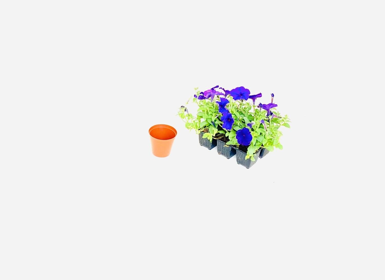 7.5cm Pot Terracotta Width 7,5cm x Height 6,5cm