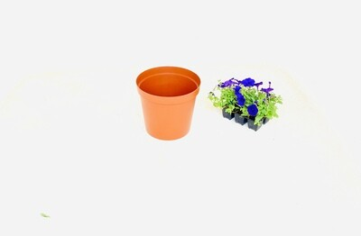 25cm Pot  Terracotta 25cm x Height 21.5cm