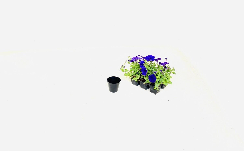 7.5cm Pot Black Width 7,5cm x Height 6,5cm