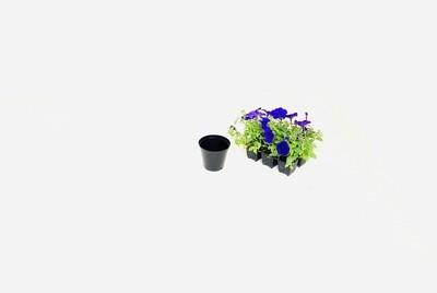 10cm Pot Black Width 10cm x Height 8,5cm