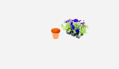 10cm Pot Terracotta Width 10cm x Height 8,5cm