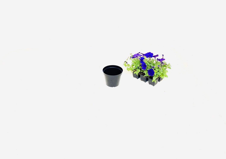 12,5cm Pot Black Width 12.5cm x Height 10cm