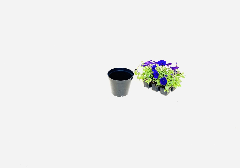 15cm Pot Black Width 15cm x Height 12,5cm