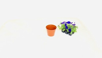 15cm Pot Terracotta Width 15cm x Height 12,5cm