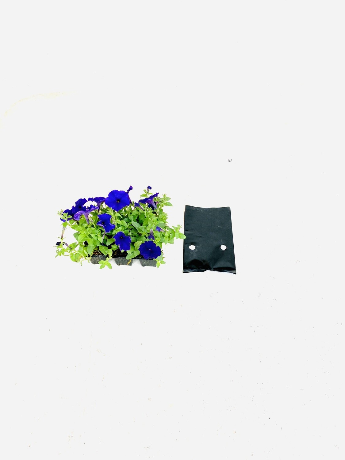 2.5 Liter Plastic Planting Growing Bags. 100 Micron R37 for 25 bags.  Diameter 143mm x Height 115mm Sold in packs of 25