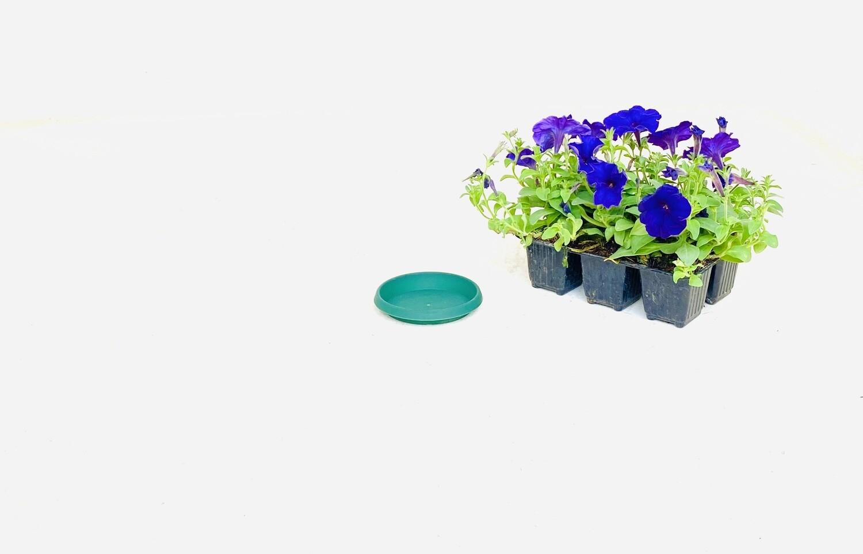 10cm Saucer green Width 10cm
