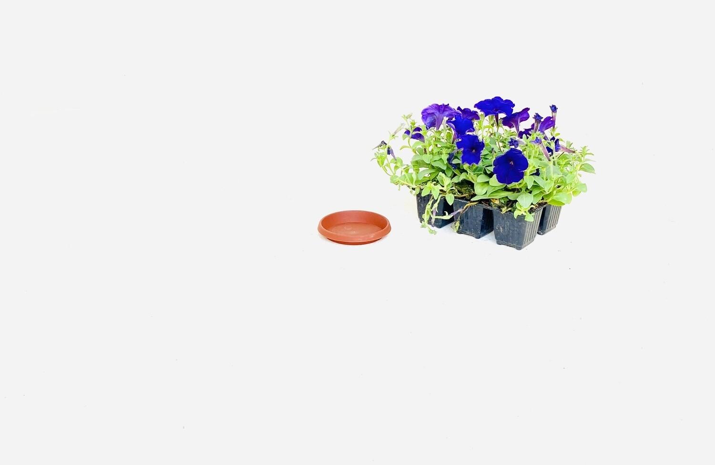 10cm Saucer Terracotta Width 10cm