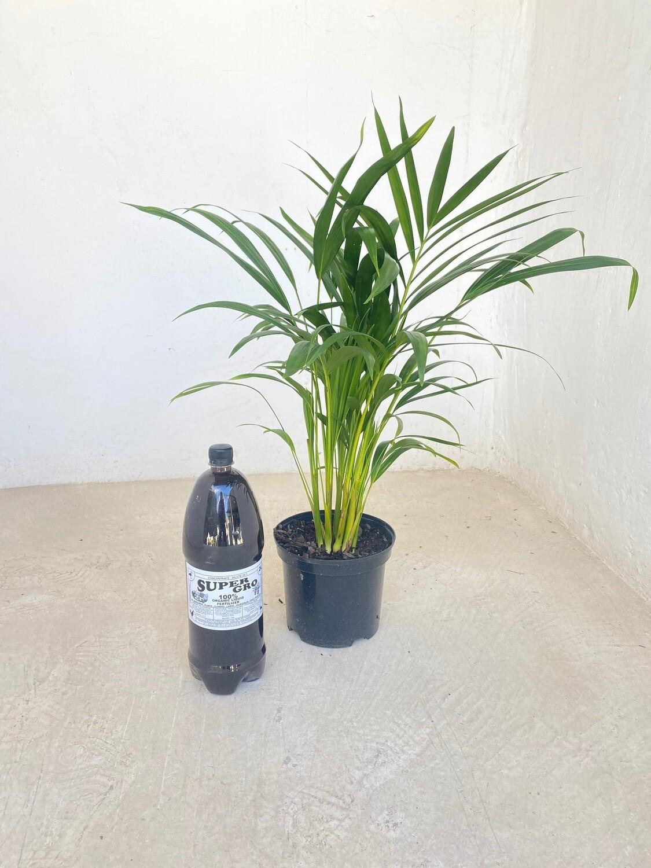 SuperGro 100% organic Fertilizer 2L (makes 20 L)