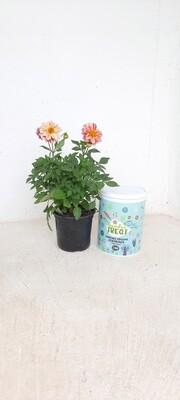 Avison Garden Treat for Flowers 3.5kg