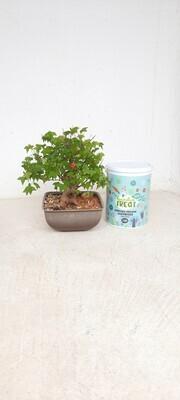 Avison Garden Treat for Trees and Fruit Trees 3.5kg