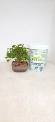Avison Garden Treat for Trees and Fruit Trees 10kg