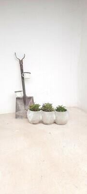 Trio Pot Whitewash Finish - H180mm x L500mm - 9.5kg