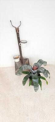Aechmea Bromelia 19cm