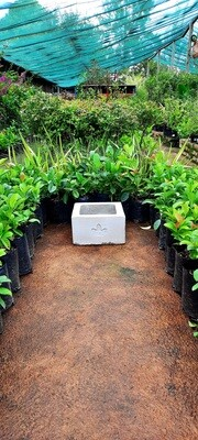 Ground Square Small Cement Pot - H250mm x W300mm