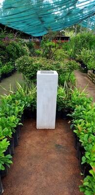 Leopard Lion Large Cement Pot - H900mm x W300mm