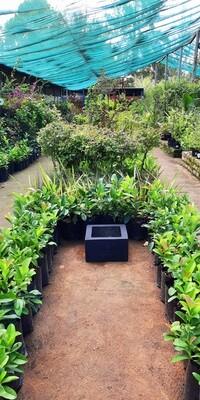 Ground Square Small Black Pot - H250mm x W300mm