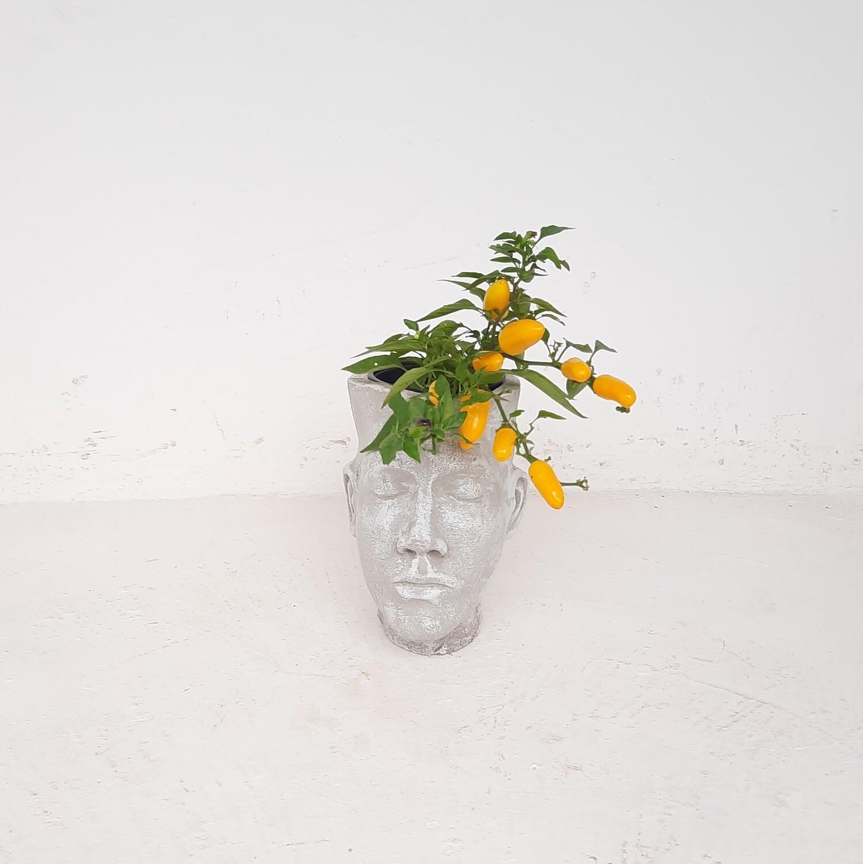 Adam Head Planter Whitewash Finish - H240mm x W150mm - 3kg