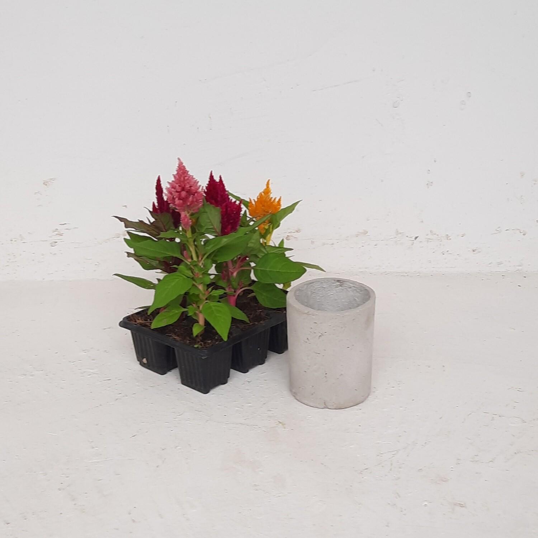 Round Plain Mini Planter Cement Finish - H115mm x W95mm - 0.5kg
