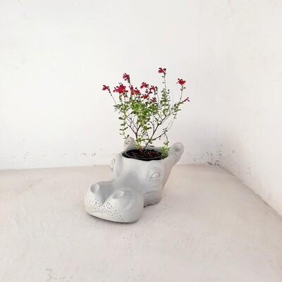 Hippo Planter Cement Colour Finish - H210mm x W280mm x L410mm- 9kg