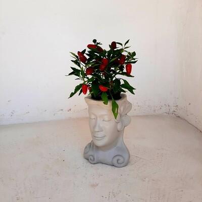 Fran Head Planter Cement Colour Finish - H260mm x W200mm - 6kg