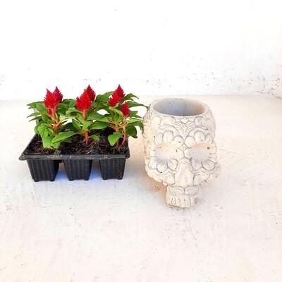 Sugar Skull Planter Cement Finish - H130mm x W135mm - 3kg