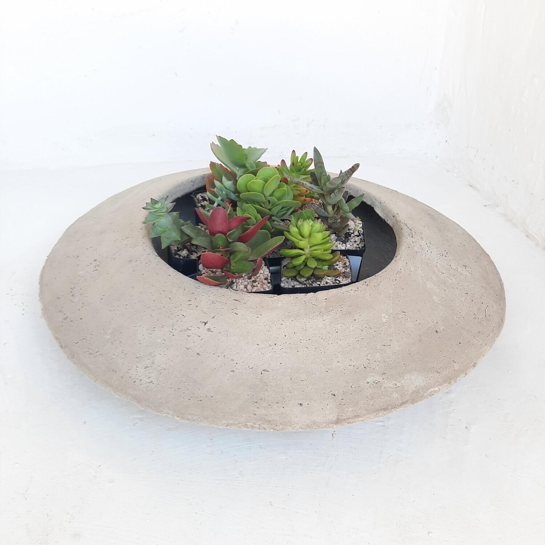 Succulent Planter Cement Finish - H150mm x W560mm