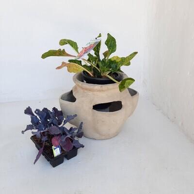 Herb Pot Cement Finish - H280mm x L400mm