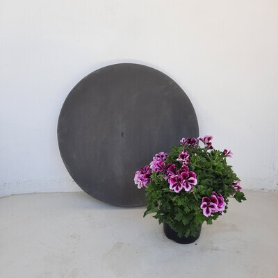 Round Stepping Stone EXTRA LARGE Black - 585x60mm - 39kg