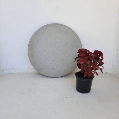 Round Stepping Stone EXTRA LARGE Cement Finish - 585x60mm - 39kg
