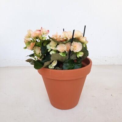 Terracotta Pot Standard 20cm