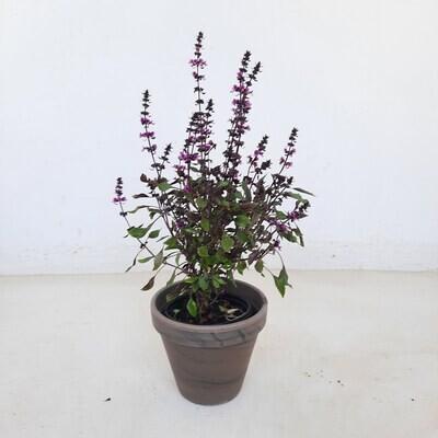 Flower Pot Basalt 14cm