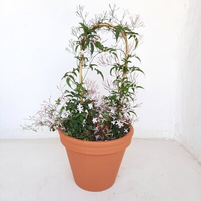 Terracotta Pot Standard 28cm