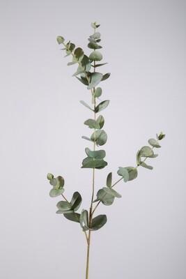 Eucalyptus 81 cm