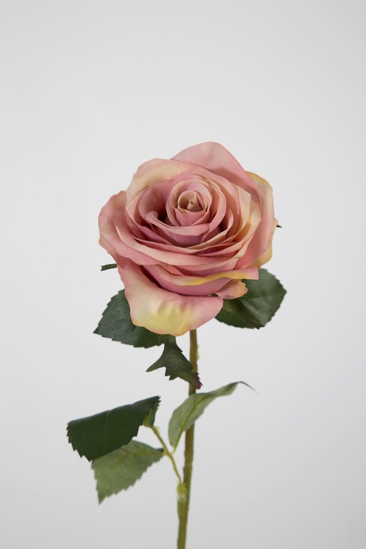 Roos 54 cm