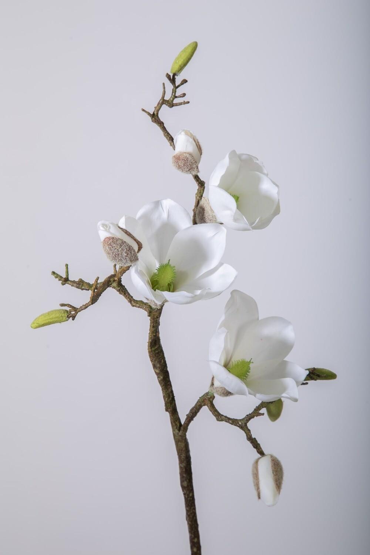 Magnolia 59 cm