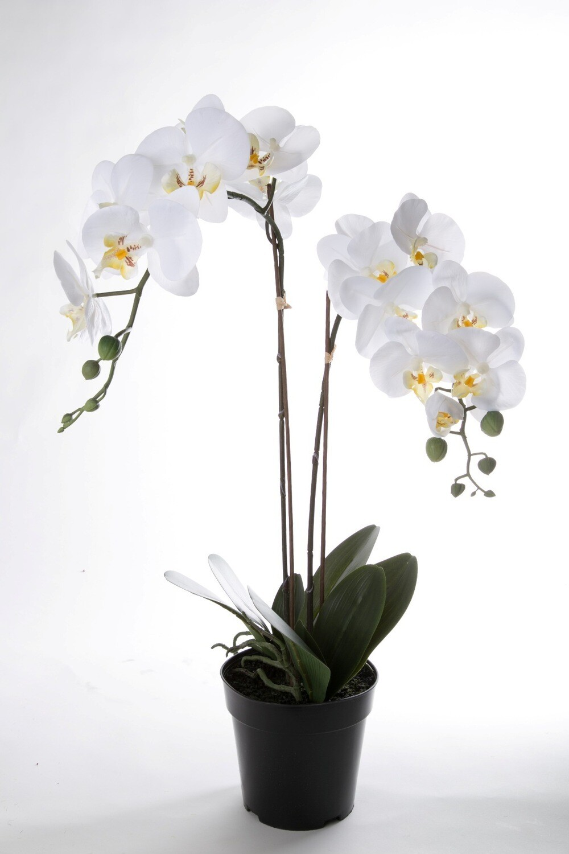 Orchideeën in pot 68 cm