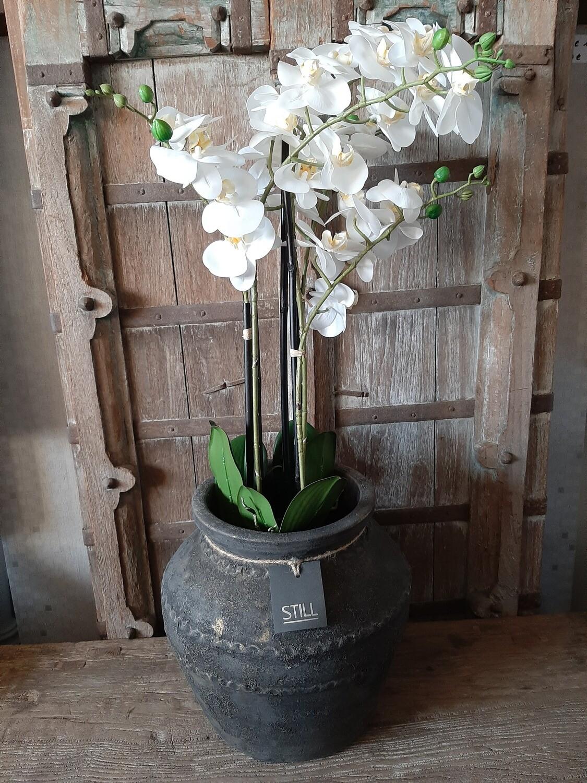 Vaas STILL met orchideeën (kunst)