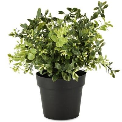 Bloempot met groene plant