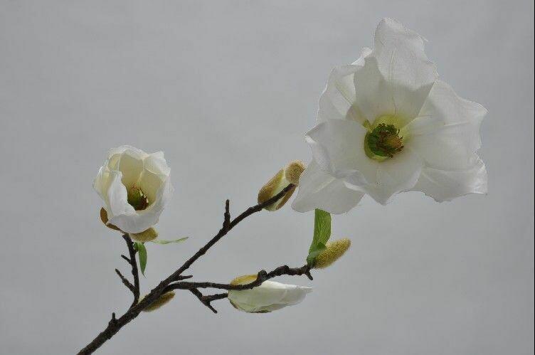 Magnolia tak wit 74 cm