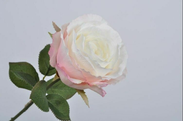 Roos steel wit/roze 51 cm