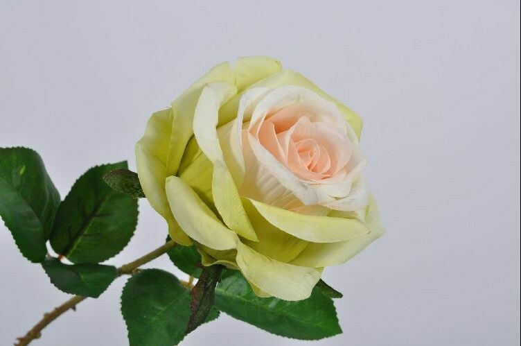 Roos steel perzik/crème 46 cm
