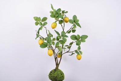 Plant citroen groen 80 cm