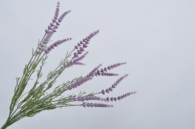 Lavendel bush paars 48 cm