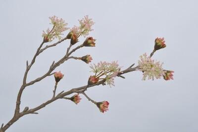 Houttak roze 60 cm