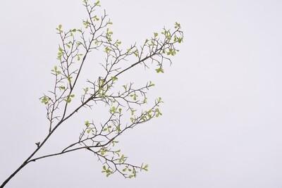 Bladtak bruin/groen 91 cm