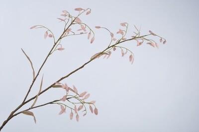 Gras tak roze 113 cm