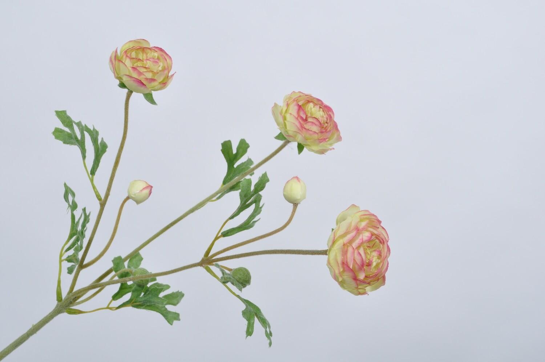 Ranonkel tak roze/groen 66 cm
