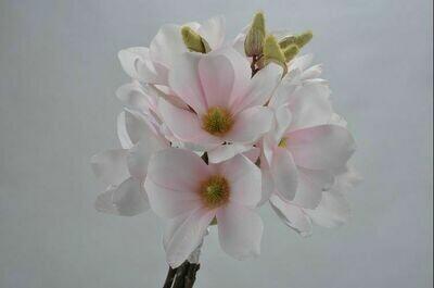 Magnolia boeket licht roze 40 cm